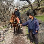 Trekking up on a mule